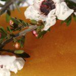 The Many Majesties of Manuka Honey